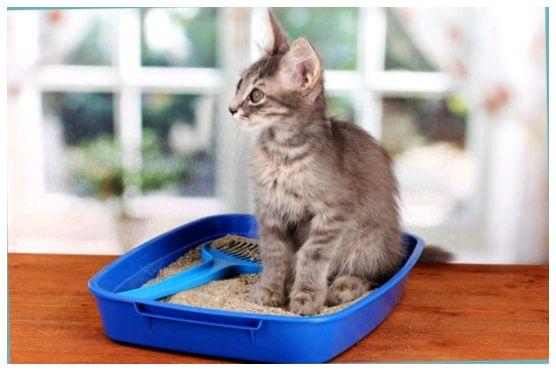 Что нужно коту в домашних условиях
