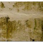 Подготовка стен к поклейке обоев — основные этапы