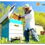 Строительство пчелиного улья своими руками