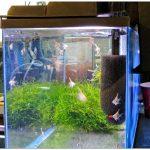Выбираем оборудование для аквариума: фильтры для очистки воды