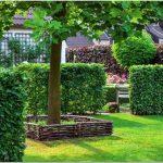 Живая изгородь на даче для ограждения и просто для красоты