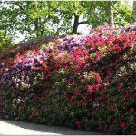 Озеленение и благоустройство территорий: красота, польза и практичность в одном решении