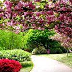 Многолетние цветущие кустарники: сад мечты своими руками у вас дома