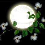 Лунный календарь садовода-огородника на август 2016 года