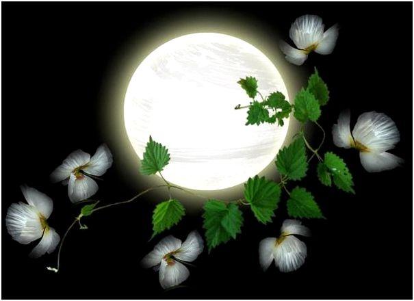 Лунный календарь дачных работ на август 2016 года