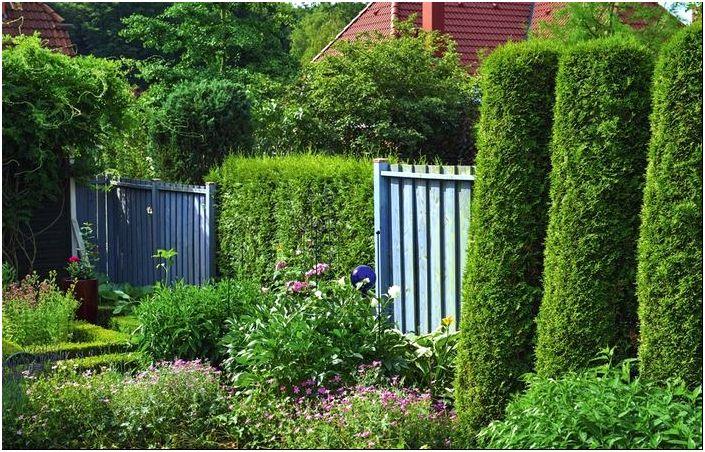 Живая изгородь: 12 образов для зеленого забора. Обсуждение на ...