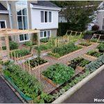 Декоративный огород: особенности создания и оформления
