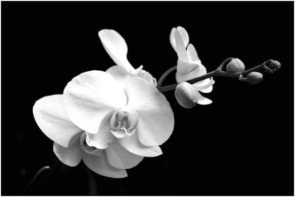 Фото для обоев под заказ-орхидеи