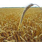 Аграрный сектор Приморья стал интересным объектом для инвесторов из Южной Кореи