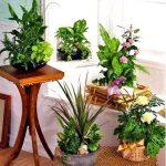 Цветы для кухни в гармонии с мебелью