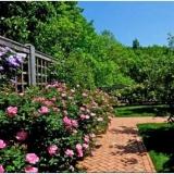 Розы в дизайне сада и ландшафтном дизайне