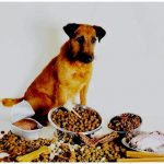 Как выбрать лучшего ветеринара для вашей собаки — советы рекомендации в 2021 году